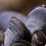 В Севастополе оштрафовали местного жителя за незаконную добычу мидий