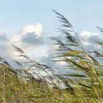МЧС Крыма объявило штормовое предупреждение из-за сильного ветра