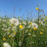 Праздничные выходные порадуют севастопольцев долгожданным теплом