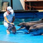 Дельфинарием в Артбухте занимаются судебные приставы и прокуратура