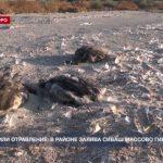 Эпидемия или отравление: в районе залива Сиваш массово гибнут птицы