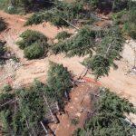 Аллею сохранили, а деревья нет: власти рассказали о вырубке в районе Казачьей бухты