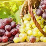 Как защитить виноград от болезней и вредителей, календарная схема обработки