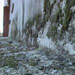 Сырость в подвале и плесень на стенах: жители ул. Ивана Голубца жалуются на УК