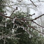 В Севастополе в ближайшее сутки ожидается ледяной дождь