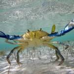 Животные песчаного мелководья Черного моря