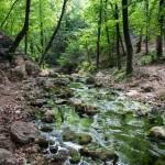 Крымский буковый лес