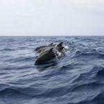 Виноваты рыбаки? С начала года в Крыму нашли более 300 погибших дельфинов