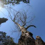 Развожаев потребовал разобраться, почему в скверах засыхают деревья