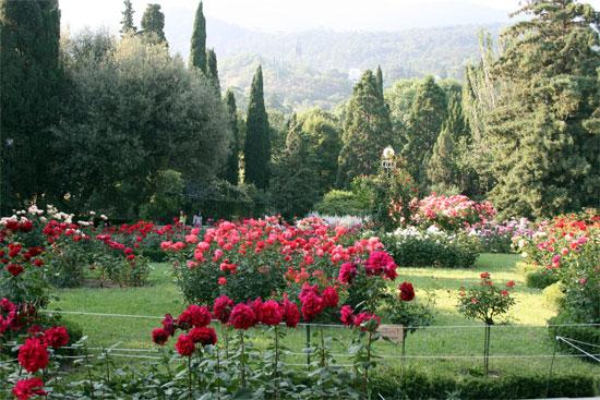 Тысячи роз Никитского сада