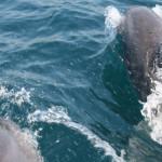 Морские прогулки с дельфинами, Судак 2009